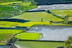 Riz-terrasses de Sagada Image libre de droits