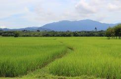 Riz thaï Image libre de droits