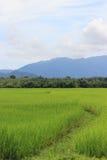 Riz thaï photographie stock