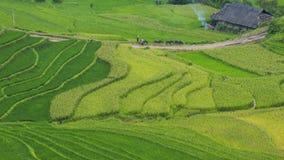 riz Vietnam de zone Photo stock