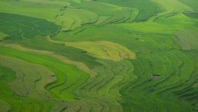 riz Vietnam de zone Photos stock