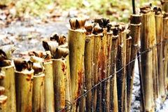Riz visqueux rôti dans les joints en bambou Images libres de droits