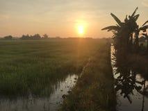 Rizière au coucher du soleil Photographie stock libre de droits
