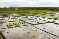 Rizière d'agriculture Image stock