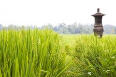 Rizière de Balinese, Indonésie photo libre de droits