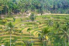 Rizière de terrasse de Tegalalang Bali images stock