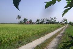 rizière higway photographie stock
