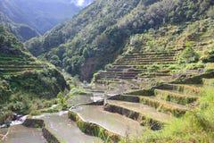 Rizières de Philippines image libre de droits