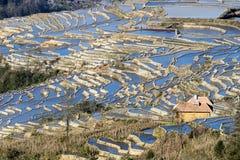 Rizières, terrasses de riz photos stock