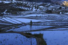 Rizières, terrasses de riz photo libre de droits