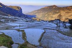 Rizières, terrasses de riz photographie stock libre de droits