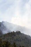 Rök i skogen Arkivfoto