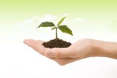 ręki roślina Zdjęcie Royalty Free