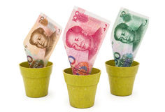 RMB in flower pots Stock Images