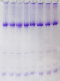 RNA i elektroforeza Obrazy Royalty Free