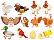 Różni ptaki jakby Obraz Royalty Free
