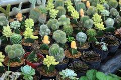 Różnorodny kaktus Obrazy Stock