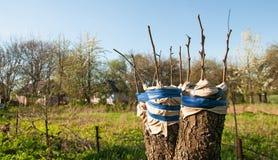 Rénovation d'arbre Photographie stock