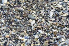 seashells ejected by wave to the seashore royalty free stock images