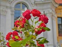 Rnstein do ¼ de DÃ no vale de Wachau (perto de Viena) - rosas Imagem de Stock