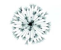 Röntgenbild einer Blume auf Weiß, der Bell-Agapanthus Stockfotografie