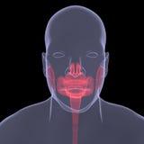 Röntgenfoto van een persoon. Pijnlijke spijsvertering Stock Foto's