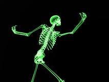 Röntgenstråleben 2 Arkivfoton
