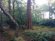Różny drzewo w Forrest Zdjęcia Stock