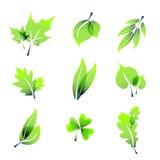 Zielony lato opuszcza ikony Zdjęcie Stock
