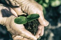 Roślina w rękach zdjęcia royalty free