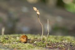 Rośliny ledwo żywy obsiadanie na mech obraz royalty free