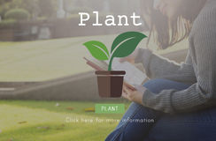 Rośliien drzew ekologii Środowiskowej konserwaci Narastający pojęcie Fotografia Royalty Free