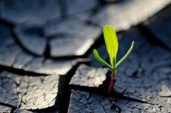 Rośliien przerwy przez pustyni zdjęcie royalty free