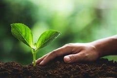 Rośliien rozsady w naturze zasadzają drzewnej naturalnego tła rośliny Kawowe rozsady w natury zieleni świeżej fotografia royalty free