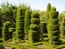 Rośliien rzeźby Zdjęcie Royalty Free