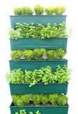 Rośliien ziele w garnkach wieszają na ścianie Zdjęcia Royalty Free