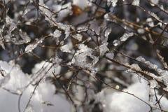roślin, mrożone Obraz Stock