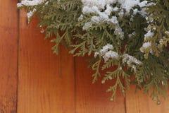 roślin, mrożone Fotografia Royalty Free