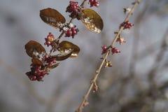 roślin, mrożone Zdjęcie Royalty Free