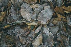roślin, mrożone Fotografia Stock