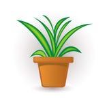 roślina Obraz Royalty Free