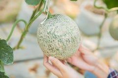 Roślina badacze prowadzą dochodzenie przyrosta zdjęcia royalty free