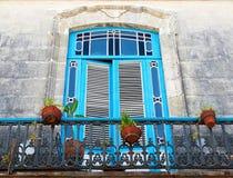 roślina balkonowi błękitny starzy garnki Fotografia Stock