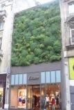 Roślina budynek obrazy royalty free