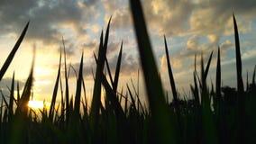 roślina cień w popołudniu Fotografia Stock
