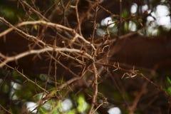 Roślina cierń zdjęcie royalty free