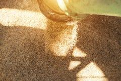Roślina dla przetwarzać adrę i przechować, ładuje adrę w ciężarowego ciało, zakończenie słońce, suszarnicza kukurudza zdjęcie royalty free
