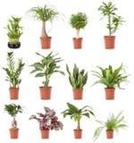 roślina domowy garnek Obraz Royalty Free