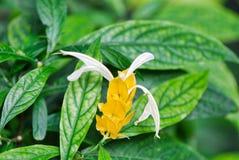 roślina, flora, liść, kwiat, insekt, siarczany motyl, siarka motyl, kapuściany motyl Zdjęcie Stock