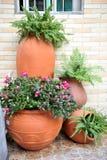 roślina garnek zdjęcie stock